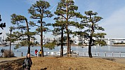 2015-02-07 11.19.30 Jim - Tokyo - in around Odaiba Park - Simon and supported tree.jpeg: 5312x2988, 7448k (2015 Feb 21 08:45)