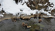 2015-02-13 10.50.14 Jim - Jigoku Valley Snow Monkeys - in onsen.jpeg: 5312x2988, 4924k (2015 Jun 07 02:11)