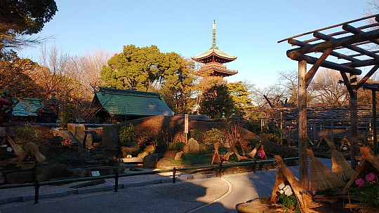 2017-01-11 15.19.03 IMG_20170111_151903539 Simon - Ueno Toshogu Peony Garden and Pagoda.jpeg: 4160x2340, 2106k (2017 Jan 11 06:22)