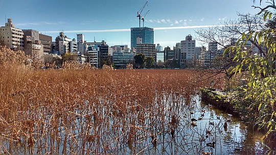 2017-01-11 12.40.15 2017-01-10 Simon - Hasu Pond with Ueno behind.jpeg: 4160x2340, 4913k (2017 Jan 11 03:42)