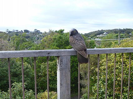 2019-11-15 09.35.36 P1000783 Jim - Kaka on balcony.jpeg: 4320x3240, 4838k (2019 Nov 14 20:35)